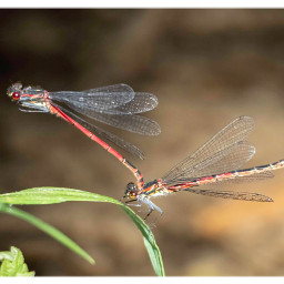 dragonfly insects nature pictureoftheday freetoedit