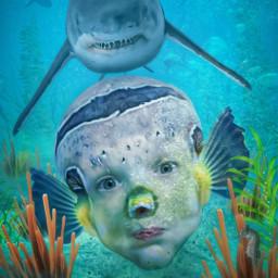 underwater shark fish myson funny