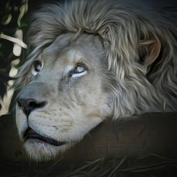 lion nature picsoftheday