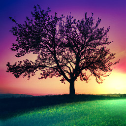 myedit nature tree landscape colorful freetoedit