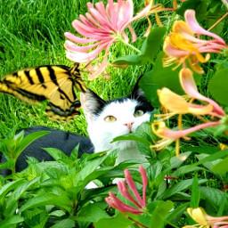 freetoedit cats butterflies garden flowers