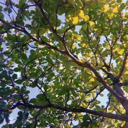 leaves photography leave freetoedit huji