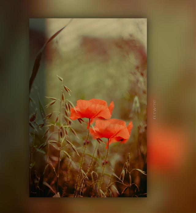 #freetoedit #flowers  @freetoedit