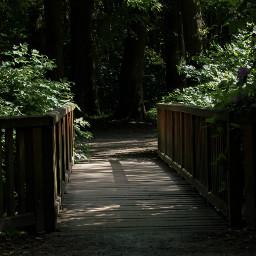 freetoedit nature naturephotography photography walking