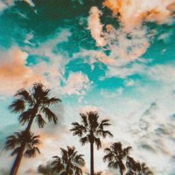 night art beach sunset pretty freetoedit