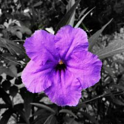 floral colours uniqueart freetoedit eccolorpop colorpop colorsplash