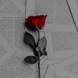 freetoedit remix remixit rose redrose eccolorpop colorpop colorsplash