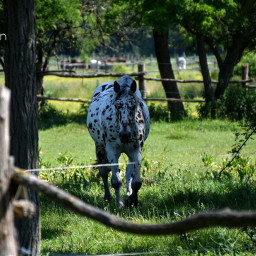 horse petsandanimals stable
