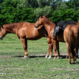 horses petsandanimals stable