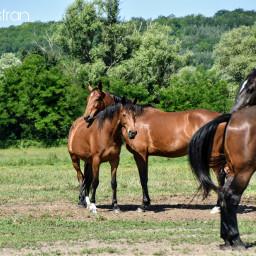 horses stable equestrian petsandanimals