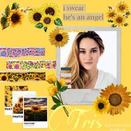 sunflower yellowflower flower divergentobsession divergent freetoedit