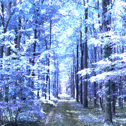 freetoedit forest nature naturephotography winter