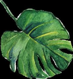 leaves leaf nature aesthetic background freetoedit