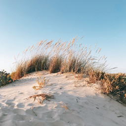 nature beachvibes dunes beachdunes wildplants freetoedit