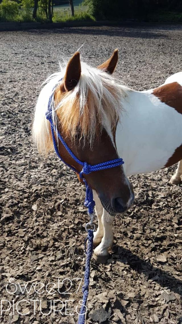 #freetoedit #pony #love #cute #beautifull