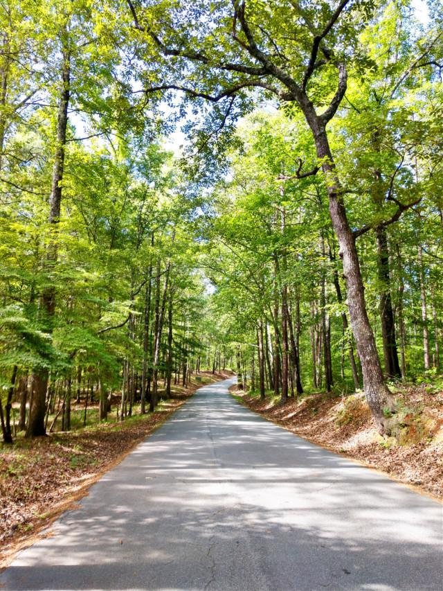#freetoedit #outdoors #nature #naturelover #road #summer #summervibes #travel #myphoto #happy #happiness #green #adventure #adventuretime #sun #sunnyday #summerthrowback
