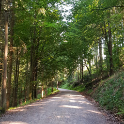 freetoedit forest blackforest photography germany
