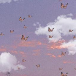 butterfly butterflies sky aesthetic freetoedit