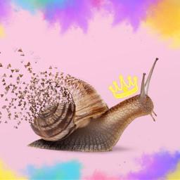 freetoedit snail artisticcollage art animal