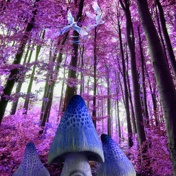 freetoedit fairytale pink magical forest