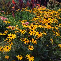 summer flowers peaceandlove