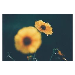 freetoedit flower nature japan
