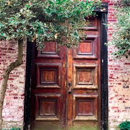 door tree old aesthetic doors pcdoortraits doortraits
