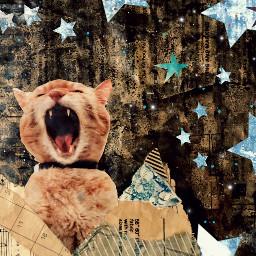 freetoedit cat stars meow rcsilverstars silverstars