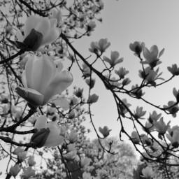 photo nature sky white flowers
