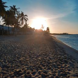 home sunset beach peaceful seagull