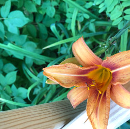 freetoedit orangeflower orange wood green