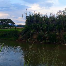 colombia nature naturallandscape waterway vegetation