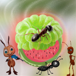 freetoedit ants fruit 🥝🐜🥝🐜🥝🐜🥝🐜🥝🐜🥝🐜🥝🐜🥝🐜🥝🐜 fruit