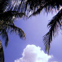 sky huji huphoto aesthetic palms freetoedit