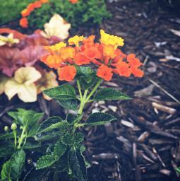 flower flowers nature naturaleza minnesota freetoedit