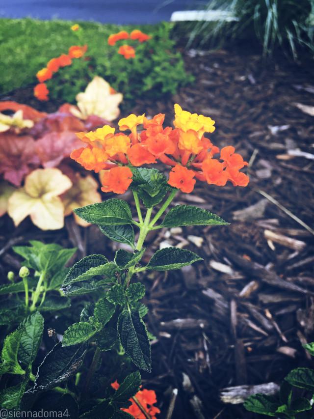 Beauty comes in all sizes- Here's a photo of some flowers I saw! :D 💗  Tags: @nqstiyq 💗✌🏻 @xxjxst_leaxx 💗✌🏻 @marlene_eim / @just_mali_ 💗✌🏻 @artist_noor 💗✌🏻 @dilara_2210 / @disney_dreamer- 💗✌🏻 @gweni_120208 💗✌🏻 @jennaulin 💗✌🏻 @avery29 💗✌🏻 @rachelvbsb88 💗✌🏻 @ruyacenik_02 💗✌🏻 @draw2liv 💗✌🏻 @sienna_the_artist 💗✌🏻 @aggie2_0 💗✌🏻  🤍🌙✨  #flower #flowers #nature #naturaleza #minnesota #photography #myphoto #alllivesmatter #blacklivesmatter #blm #siennadoma4 #summer #june  ✨✌🏻🤍 👊🏻👊🏼👊🏽👊🏾👊🏿     #freetoedit