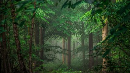 bunia0914 forest green freetoedit