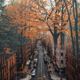 freetoedit edit surreal street forest