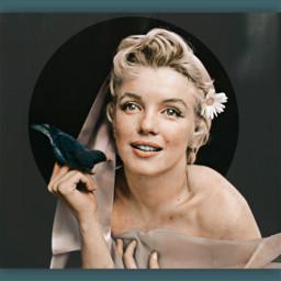 freetoedit marilynmonroe marilyn bird daisy