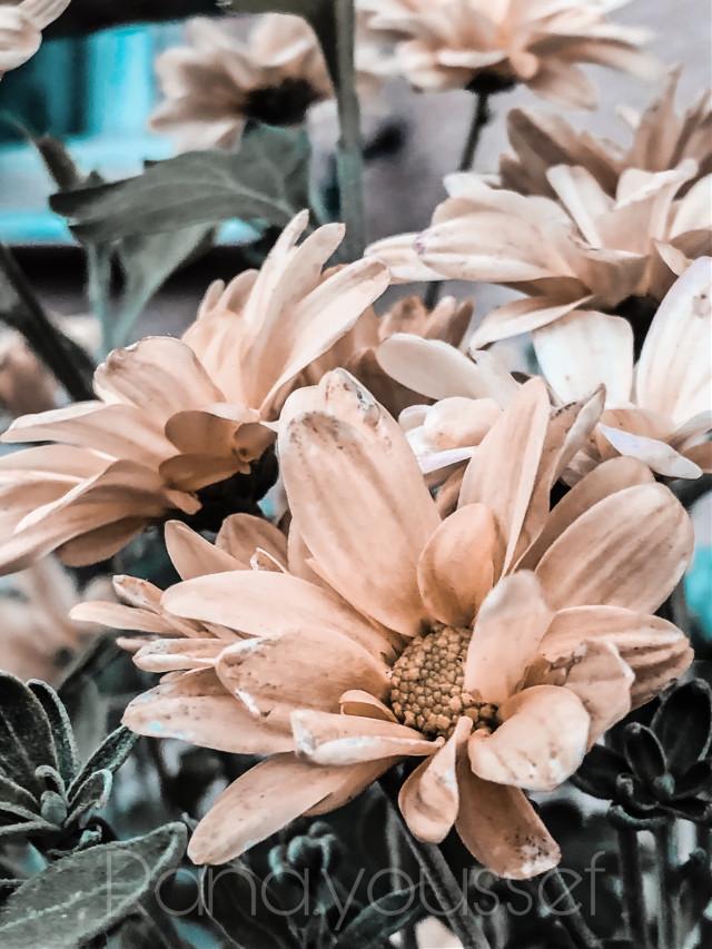 #flowerpower #flowers #art #photography #remixed