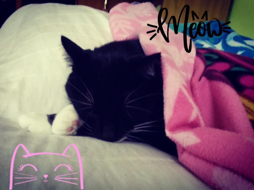 #freetoedit #cat #meow #love #dream #😺