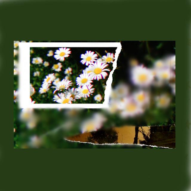 #freetoedit #flowercrown #flowerphotography
