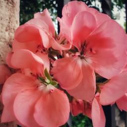 flowerphotography flowerpower flores flowersforlove flower