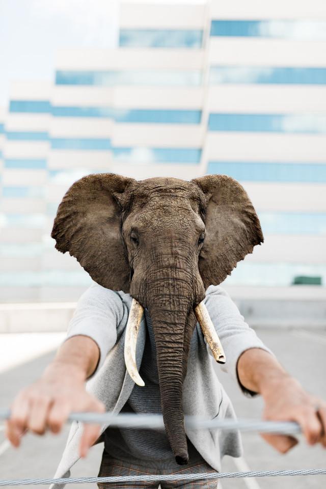 My Old Edit With New Touch  #freetoedit #hybridanimals #animalhybrid #animalselfie #animalhuman #elephant #remixed
