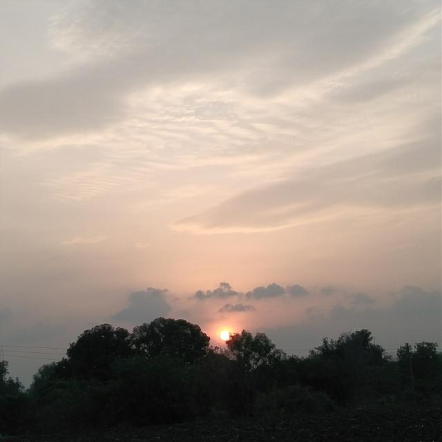 My click ♥   #sunset #treesilhouette #photographer #myclick #naturephotography #myclick📷 #papicks  #freetoedit