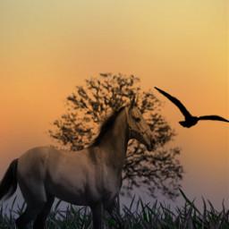 freetoedit nature horse bird gradientmask
