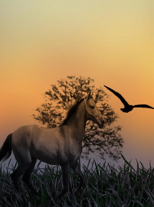 #freetoedit #nature #horse #bird #gradientmask #madewithpicsart #picsarteffects #myedit @picsart @freetoedit 💛