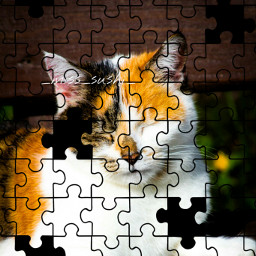 freetoedit cute cat catsofpicsart picsart