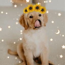 sunflowercrown littlepuppy cute sunflowers🌻💛🌻 freetoedit
