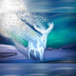 freetoedit deer moon polarlights lights
